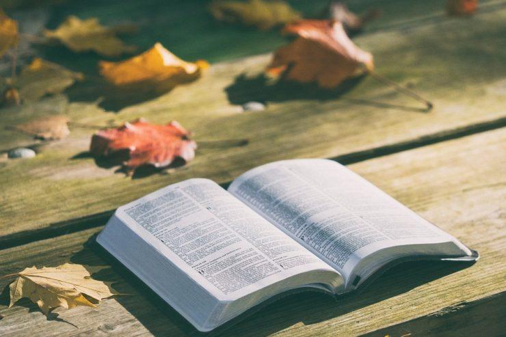 Francisco en el Ángelus: llevemos la Biblia con nosotros, como hacemos con nuestro teléfono móvil