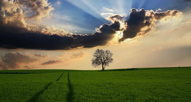 El Papa Francisco anima a luchar contra la desertificación y contribuir al bien común